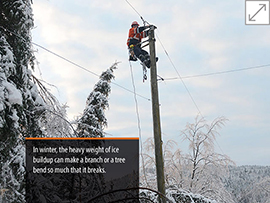 tree maintenance image winter